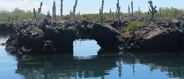 Galapagos Islands, wildlife, lava formation