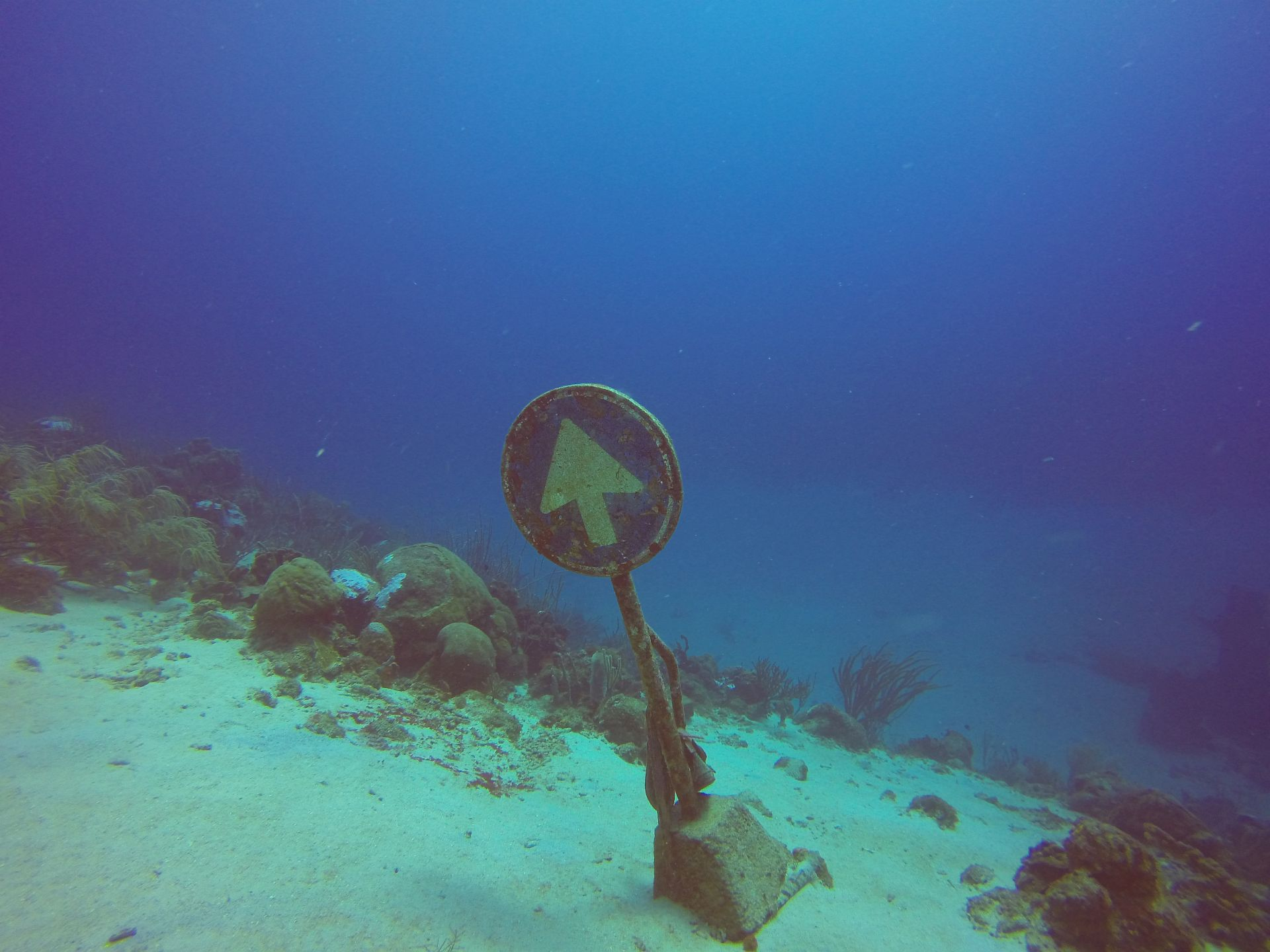 Double Reef, Curacao